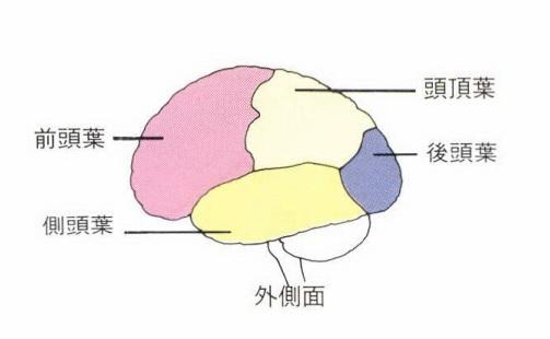 brain_4