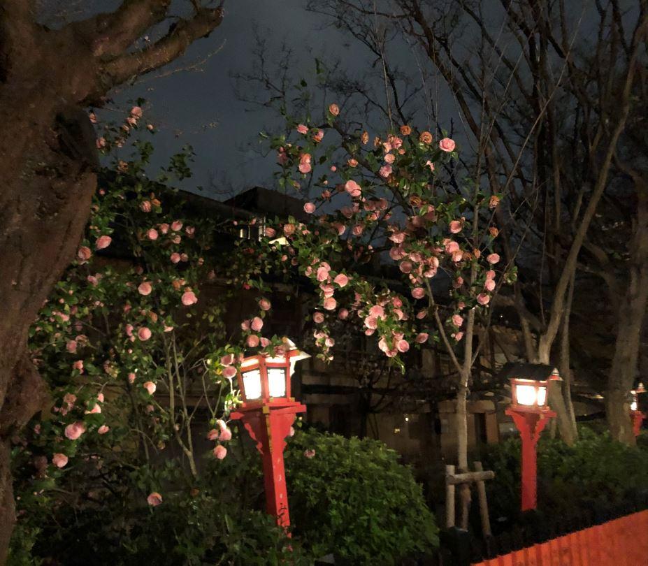 祇園夜桜2020_2