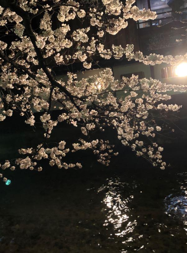 祇園白川の夜の桜3