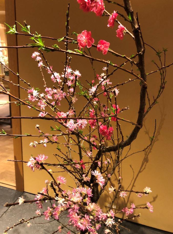 KOTOSHINAさんで飾られている枝もの2